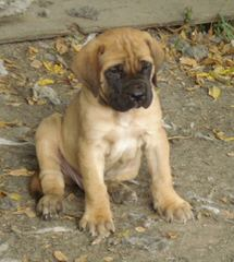 Kings And Queens Kennels - Dog Breeders