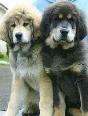 Lmkbryant@Att.Net - Dog Breeders