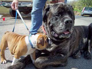 Wild Child Kennels - Dog Breeders