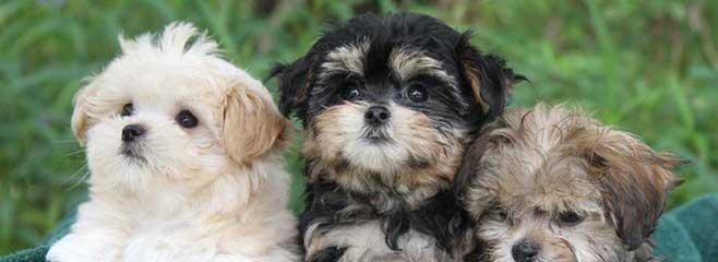 So Fine Mi-Kis - Dog Breeders