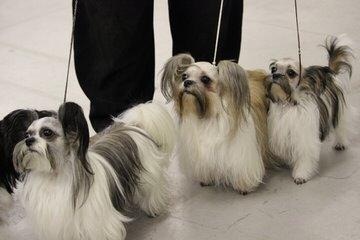 CUTE-N-CUDDLY MI-KIS - Dog Breeders