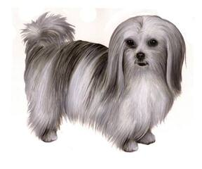Oh Mi-Ki, You're So Fine - Dog Breeders