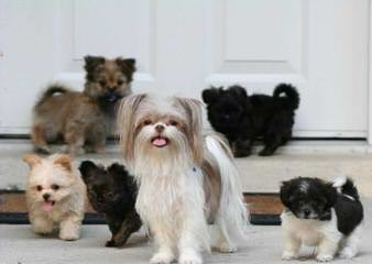 Love My Mikis - Dog Breeders