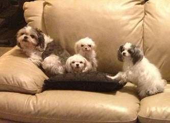 Little Angels Puppy Haven - Dog Breeders