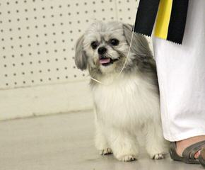 CuddleMeMi-Ki - Dog Breeders