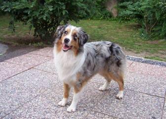 Heartland Kennels - Dog Breeders