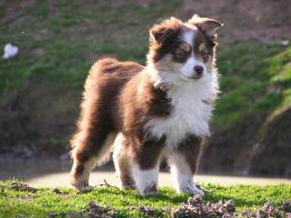 Yvonne - Dog Breeders