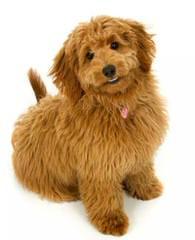 Del-Frunessa's English & American Goldendoodles Specializing In English Teddy Bear Golde - Dog Breeders