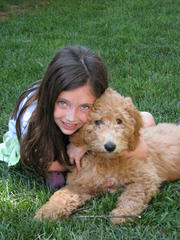 California: Mini/Petite/Toy/Micro Mini/Medium/Standard Goldendoodles - Dog Breeders