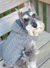 Rockyhill Schnauzers - Dog Breeders