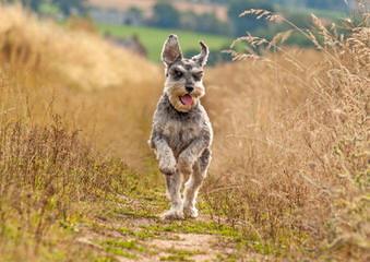 Countryside kennels - Dog Breeders