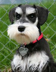 Darlene Zapp - Dog Breeders