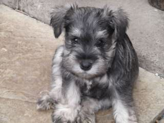 Hogg Falls Kennels - Dog Breeders