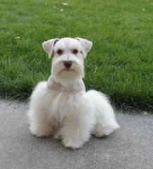 Kenda Deford - Dog Breeders