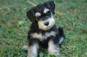Spottys Fate - Dog Breeders