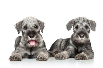Hogg Falls Stable & Kennel - Dog Breeders