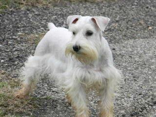 CRIADERO DE LORANO - Dog Breeders