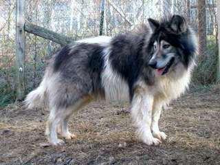 Cimarron Frontier - Dog Breeders