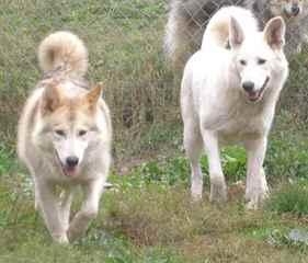 The Dunn's Den - Dog Breeders