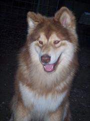 Terra Pines - Dog Breeders