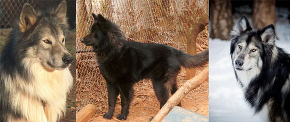 Cimarron Frontier - Dog and Puppy Pictures
