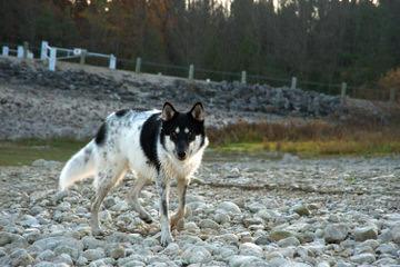 Night Eyes Farms - Dog Breeders
