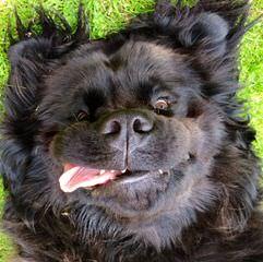 Alegup Kennels (Reg'd) - Dog Breeders
