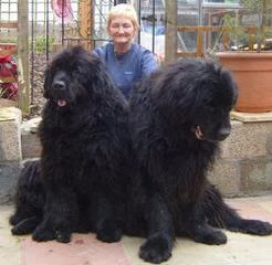 Puppys For The Family - Dog Breeders