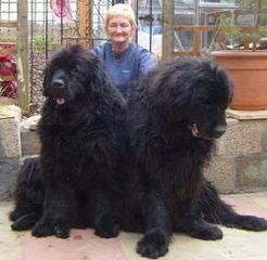Bigfoot Newfoundlands - Dog Breeders