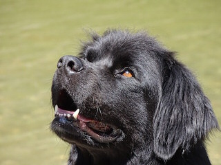 Fox River Kennel - Dog Breeders