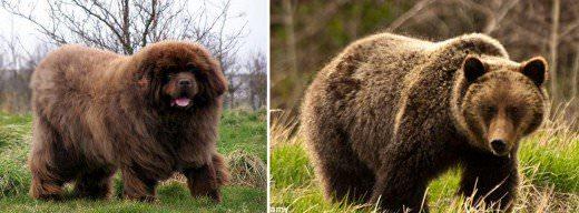 Hunterhill Kennel - Dog Breeders
