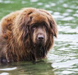 Blackbeary Kennels - Dog Breeders