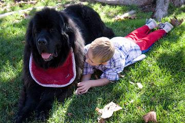 Elite Newfoundlands - Dog Breeders