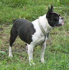 Big Thunder Events - Dog Breeders