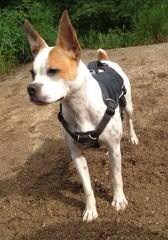 Raging Bulldogges - Dog Breeders