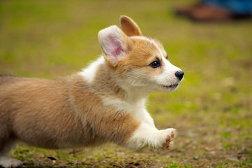 Von Barren Berg Shepherds - Dog Breeders