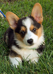 Lisa Thompson - Dog Breeders