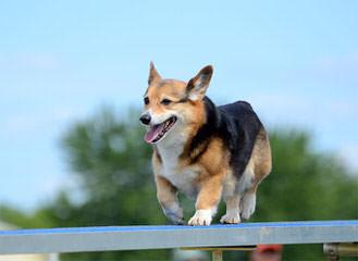 Jan's Best Corgis - Dog Breeders