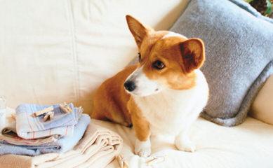 Santa Margarita Corgis - Dog Breeders