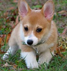 Los Osos Kennel - Dog Breeders