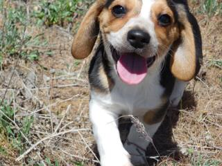 Awesome Pawsome Ranch - Dog Breeders