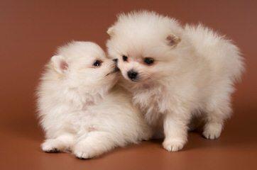FarmerGirl exotic pets - Dog Breeders