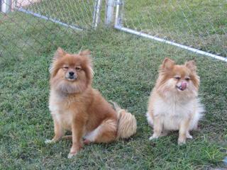 Champion Puppies - Dog Breeders
