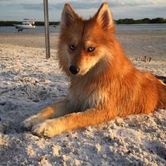 Vera - Dog Breeders