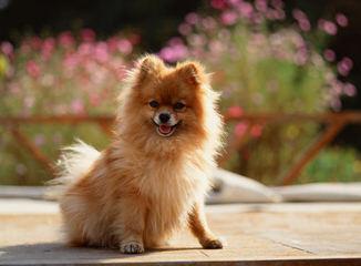 Sweet Baby Girls - Dog Breeders