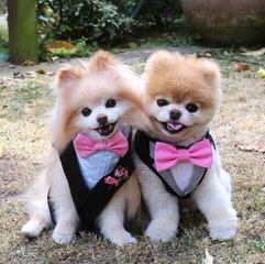 Minx - Dog Breeders