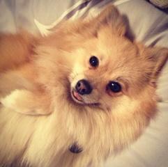 Almic Home Breeders - Dog Breeders