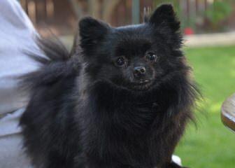 Shade Of Bark - Dog Breeders