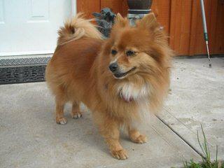 Mini Valley Farm - Dog Breeders