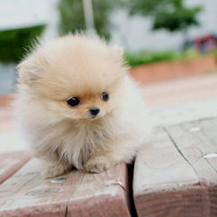 little paws & Accessories - Dog Breeders